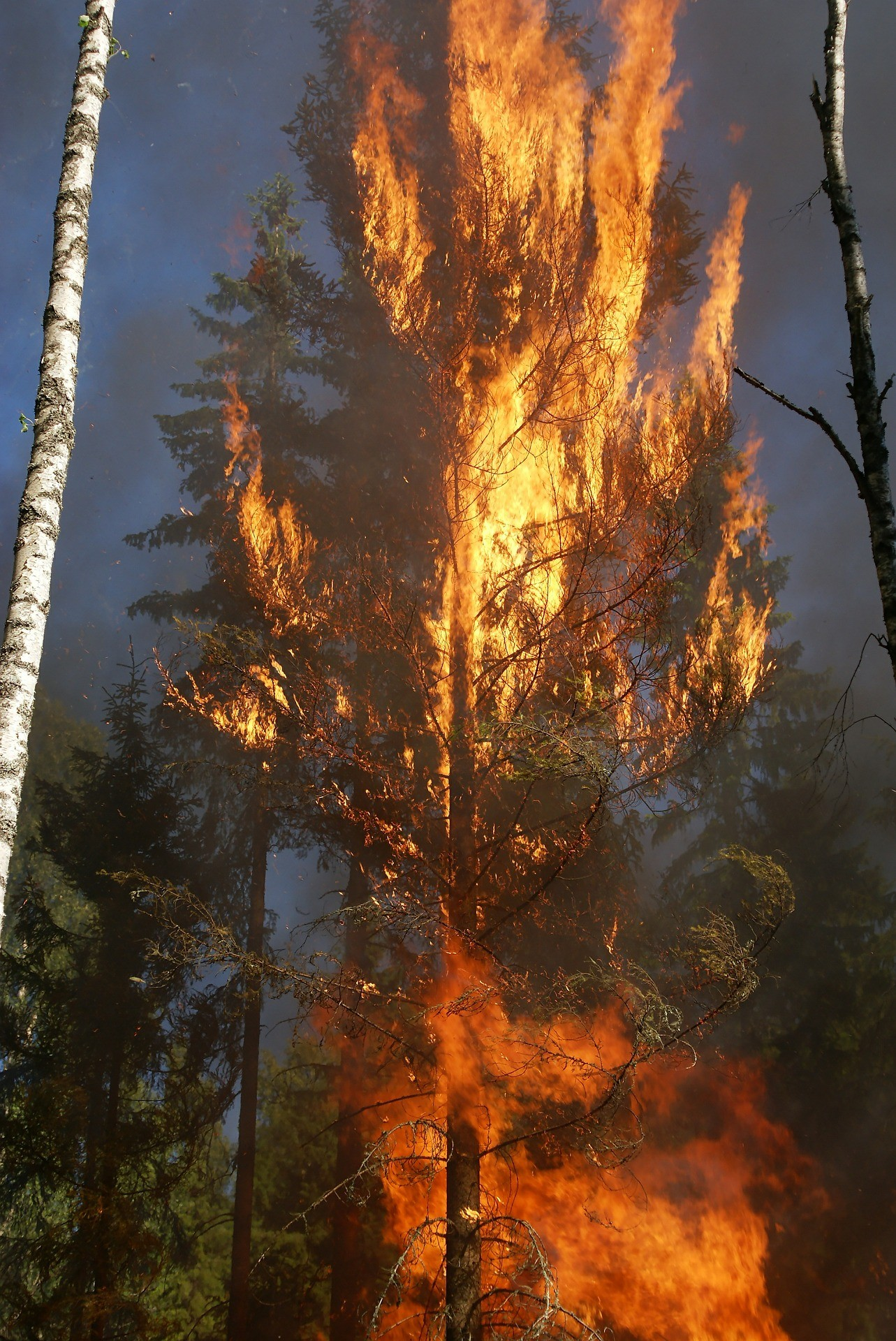 Tree Burning
